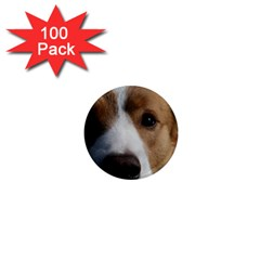 Red Border Collie 1  Mini Magnets (100 pack)