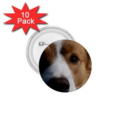 Red Border Collie 1.75  Buttons (10 pack)