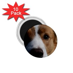 Red Border Collie 1.75  Magnets (10 pack)