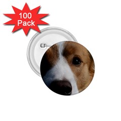 Red Border Collie 1.75  Buttons (100 pack)