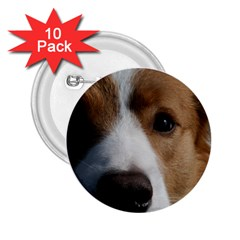 Red Border Collie 2.25  Buttons (10 pack)