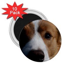 Red Border Collie 2.25  Magnets (10 pack)