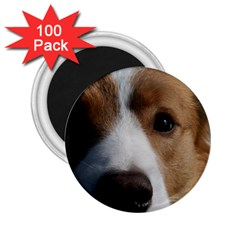 Red Border Collie 2.25  Magnets (100 pack)
