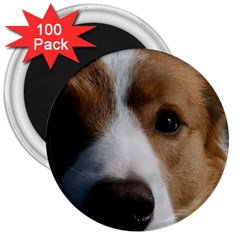 Red Border Collie 3  Magnets (100 pack)