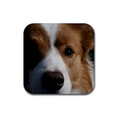Red Border Collie Rubber Square Coaster (4 pack)