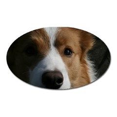 Red Border Collie Oval Magnet