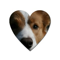 Red Border Collie Heart Magnet