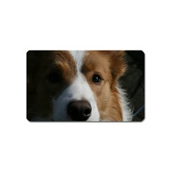 Red Border Collie Magnet (Name Card)