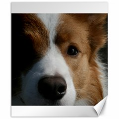 Red Border Collie Canvas 8  x 10