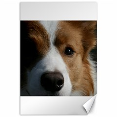 Red Border Collie Canvas 12  x 18