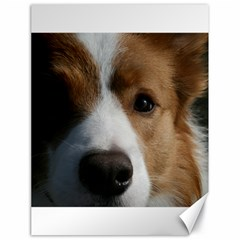 Red Border Collie Canvas 18  x 24