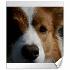 Red Border Collie Canvas 20  x 24