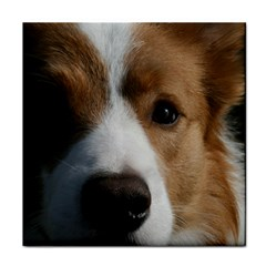 Red Border Collie Face Towel
