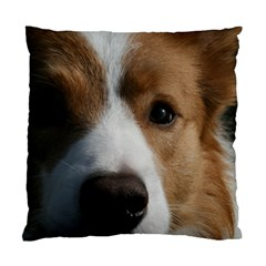 Red Border Collie Standard Cushion Case (One Side)