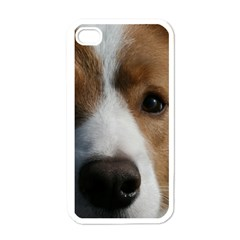 Red Border Collie Apple iPhone 4 Case (White)