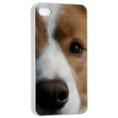Red Border Collie Apple iPhone 4/4s Seamless Case (White)