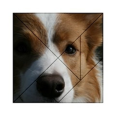 Red Border Collie Acrylic Tangram Puzzle (6  x 6 )