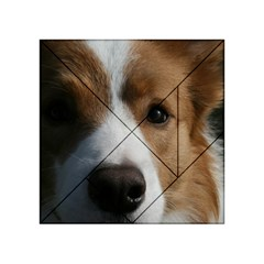 Red Border Collie Acrylic Tangram Puzzle (4  x 4 )