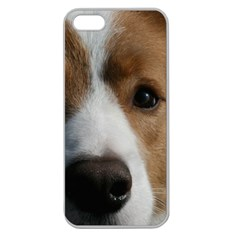 Red Border Collie Apple Seamless iPhone 5 Case (Clear)