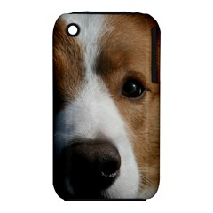 Red Border Collie iPhone 3S/3GS