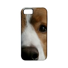 Red Border Collie Apple iPhone 5 Classic Hardshell Case (PC+Silicone)