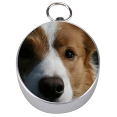 Red Border Collie Silver Compasses