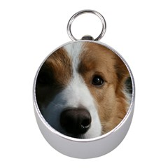 Red Border Collie Mini Silver Compasses