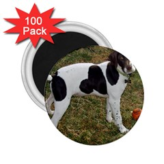 German Short Haired Pointer Puppy 2.25  Magnets (100 pack)