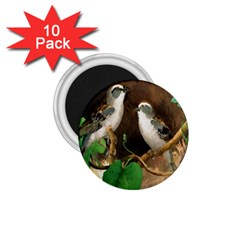 Backdrop Colorful Bird Decoration 1.75  Magnets (10 pack)