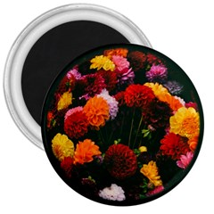 Beautifull Flowers 3  Magnets