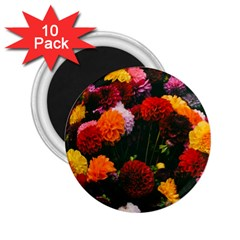 Beautifull Flowers 2 25  Magnets (10 Pack)