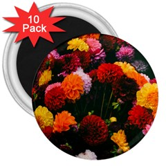 Beautifull Flowers 3  Magnets (10 pack)