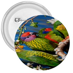 Beautifull Parrots Bird 3  Buttons