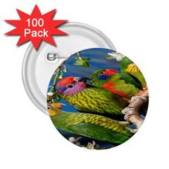 Beautifull Parrots Bird 2 25  Buttons (100 Pack)