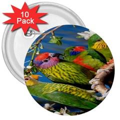 Beautifull Parrots Bird 3  Buttons (10 Pack)