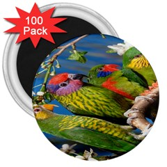 Beautifull Parrots Bird 3  Magnets (100 pack)
