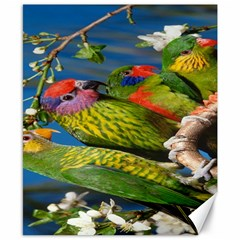 Beautifull Parrots Bird Canvas 8  x 10