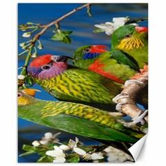 Beautifull Parrots Bird Canvas 16  x 20