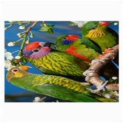 Beautifull Parrots Bird Large Glasses Cloth (2-Side)
