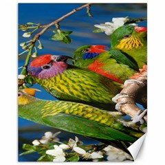 Beautifull Parrots Bird Canvas 11  x 14