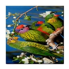 Beautifull Parrots Bird Face Towel