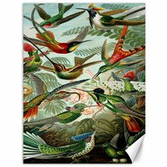 Beautiful Bird Canvas 36  x 48