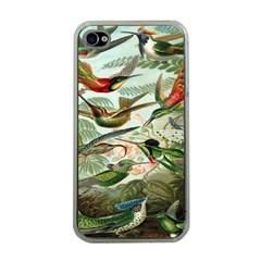 Beautiful Bird Apple iPhone 4 Case (Clear)