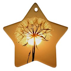 Dandelion Sun Dew Water Plants Star Ornament (Two Sides)