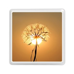 Dandelion Sun Dew Water Plants Memory Card Reader (Square)