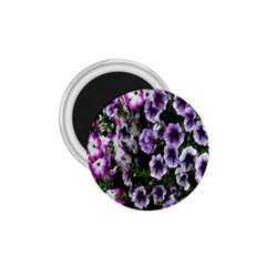 Flowers Blossom Bloom Plant Nature 1.75  Magnets