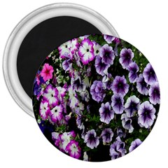 Flowers Blossom Bloom Plant Nature 3  Magnets