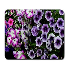 Flowers Blossom Bloom Plant Nature Large Mousepads