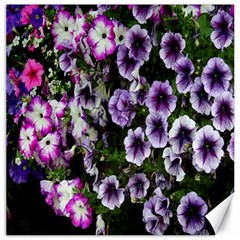 Flowers Blossom Bloom Plant Nature Canvas 12  x 12