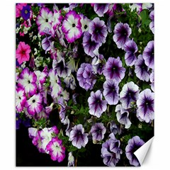 Flowers Blossom Bloom Plant Nature Canvas 20  x 24